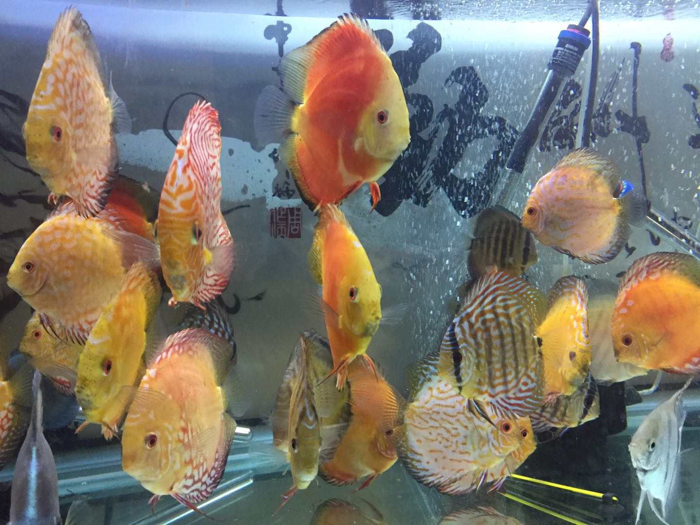 DISCUS SELL1.jpeg