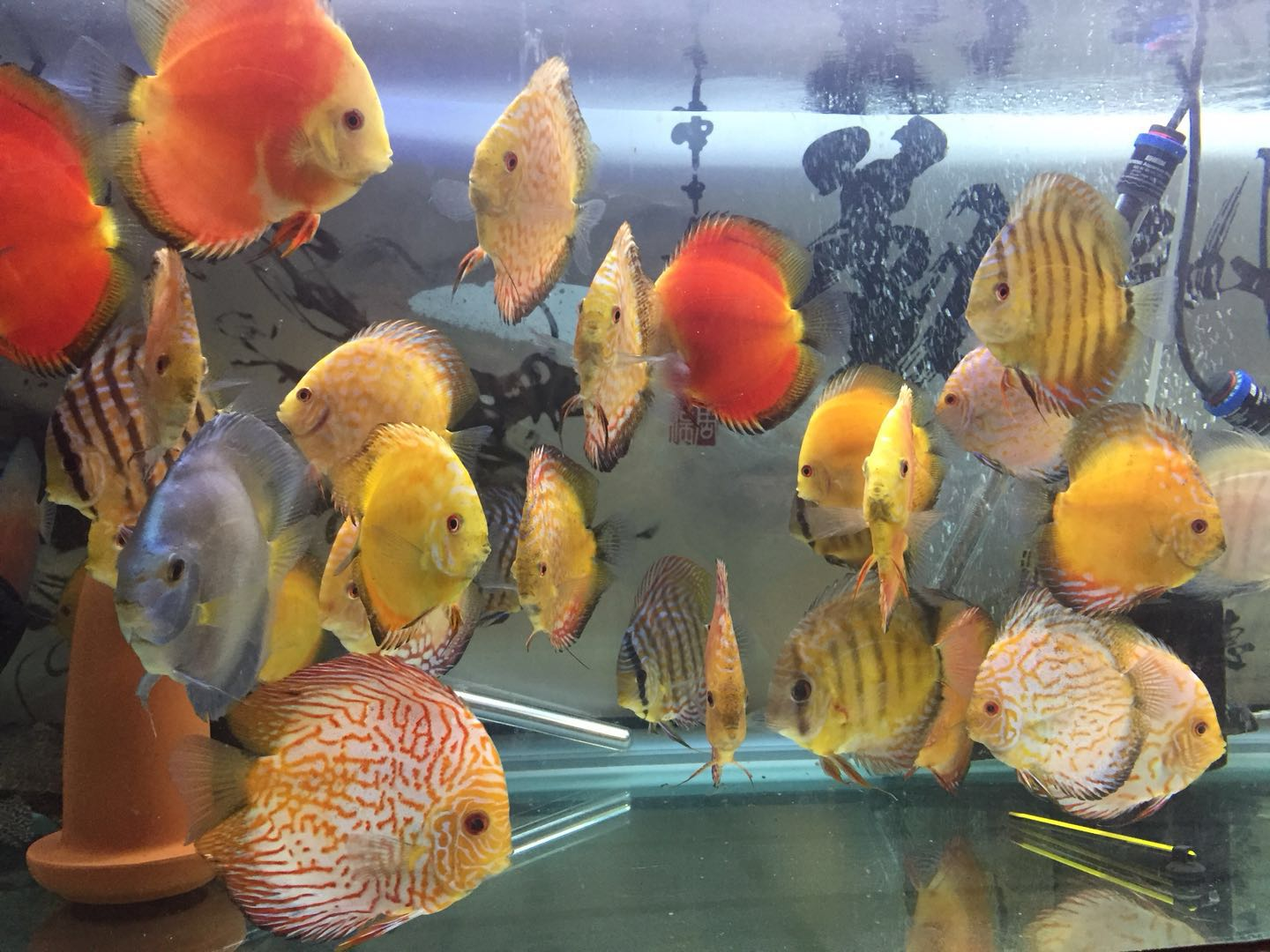 DISCUS SELL2.jpeg