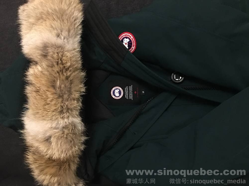 Canada goose front 1.jpeg