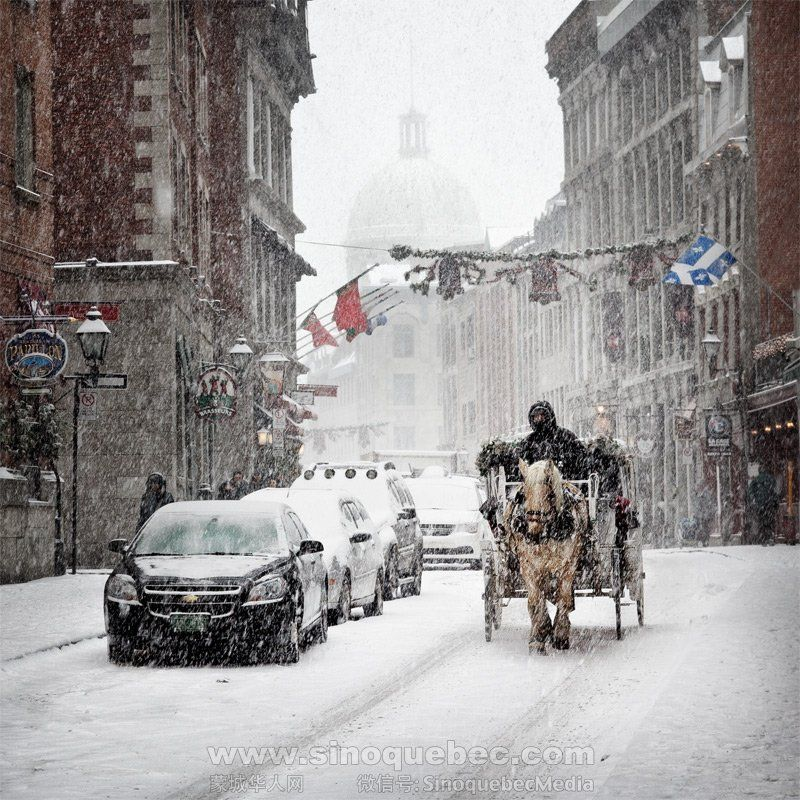 Free Montreal Plateau-Mont-Royal Horse Carriage Rides For All Of December 2014